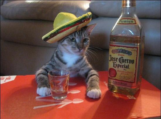 Tequila Cat
