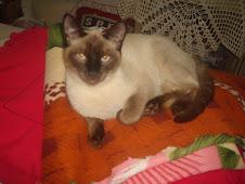 meu gato rafaél