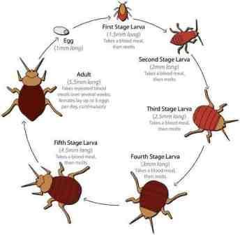 Pest Control Diary January 2013