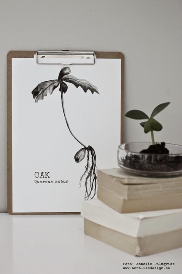 oak, ekollon, tavla, svartvit tavla, svartvita tavlor, konsttryck, artprint, artprints, webbutik, webbutiker med inredning, print, print, poster, posters, svart och vitt, grön växt, skott av blomma, stilleben, inredning, inredningsblogg, blogg, bloggen, böcker, enkelt,