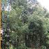 Budi Daya Cengkeh di Kabupaten Bantaeng dan Bulukumba, Sulawesi Selatan
