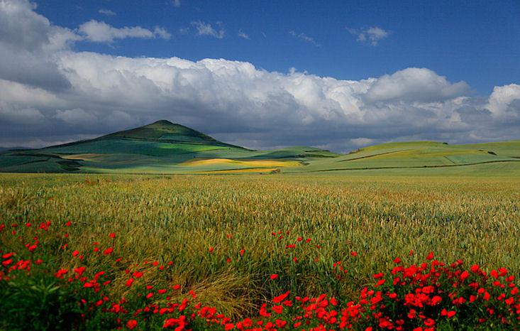 ¡Ya es primavera!Los famosos campos de tulipanes de  - Imagenes De Campos De Flores Gratis
