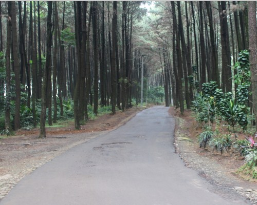 Area Status Gunung Pancar