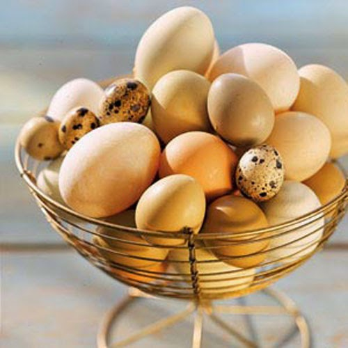 Cách bảo quản trứng gà, vịt để được lâu vài tháng không hỏng 1