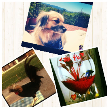 Babi's Tasting Room Is Pet Friendly!!!!!!