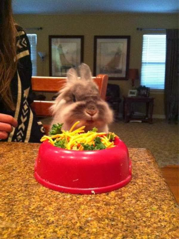 Funny animals of the week - 22 November 2013 (35 pics), bunny ready to eat dinner