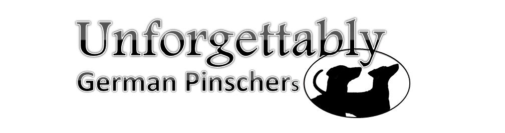 Unforgettably German Pinscher