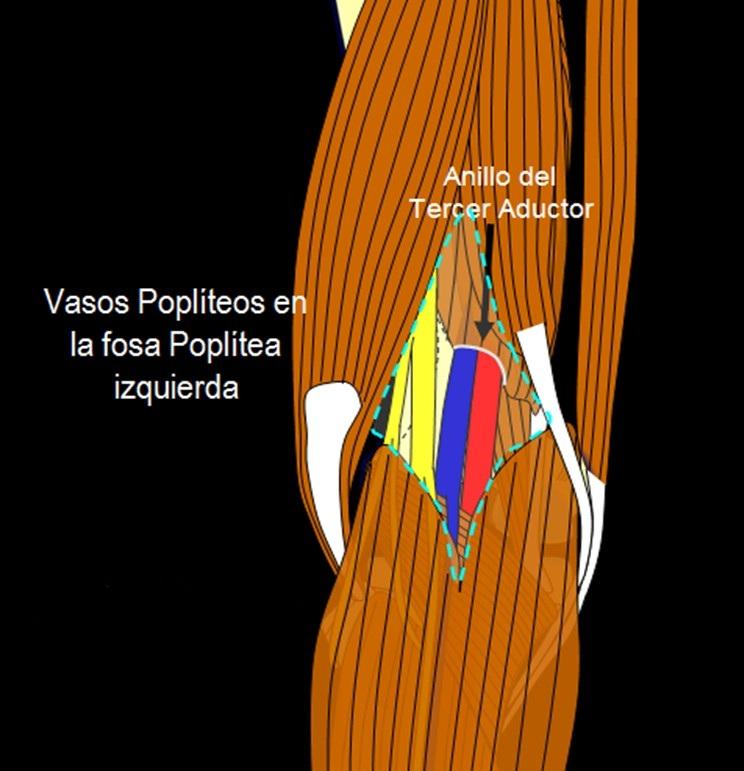 Sistema Circulatorio: Vascularización extremidad inferior