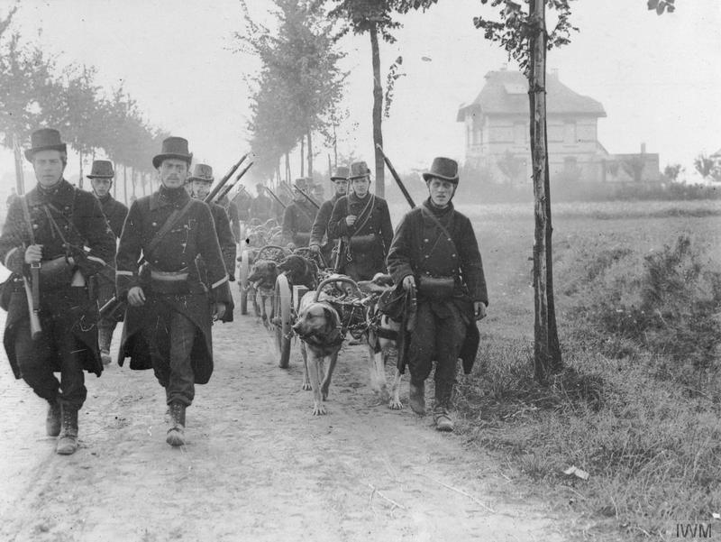 36 Amazing Historical Pictures. #9 Is Unbelievable - Belgian light artillery towed by dog teams, Western Front 1914.