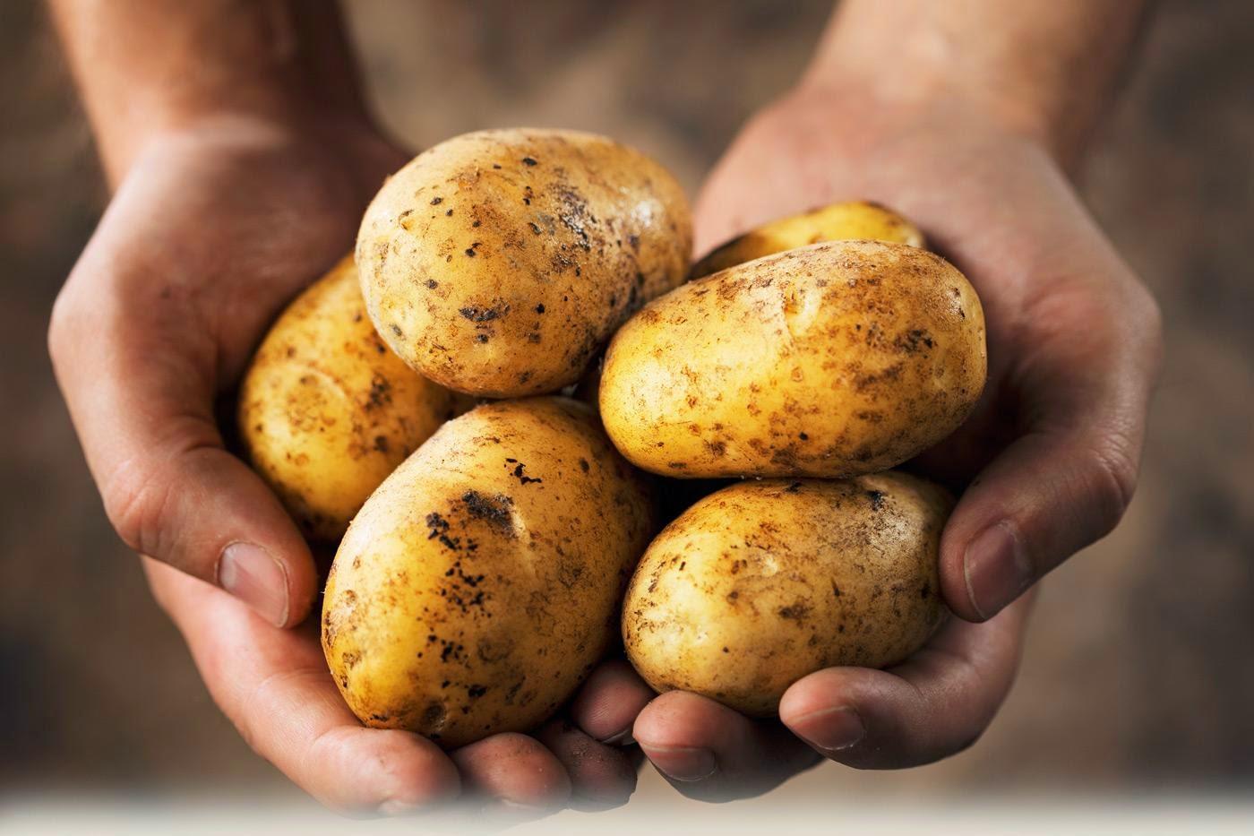 le patate e la loro cottura