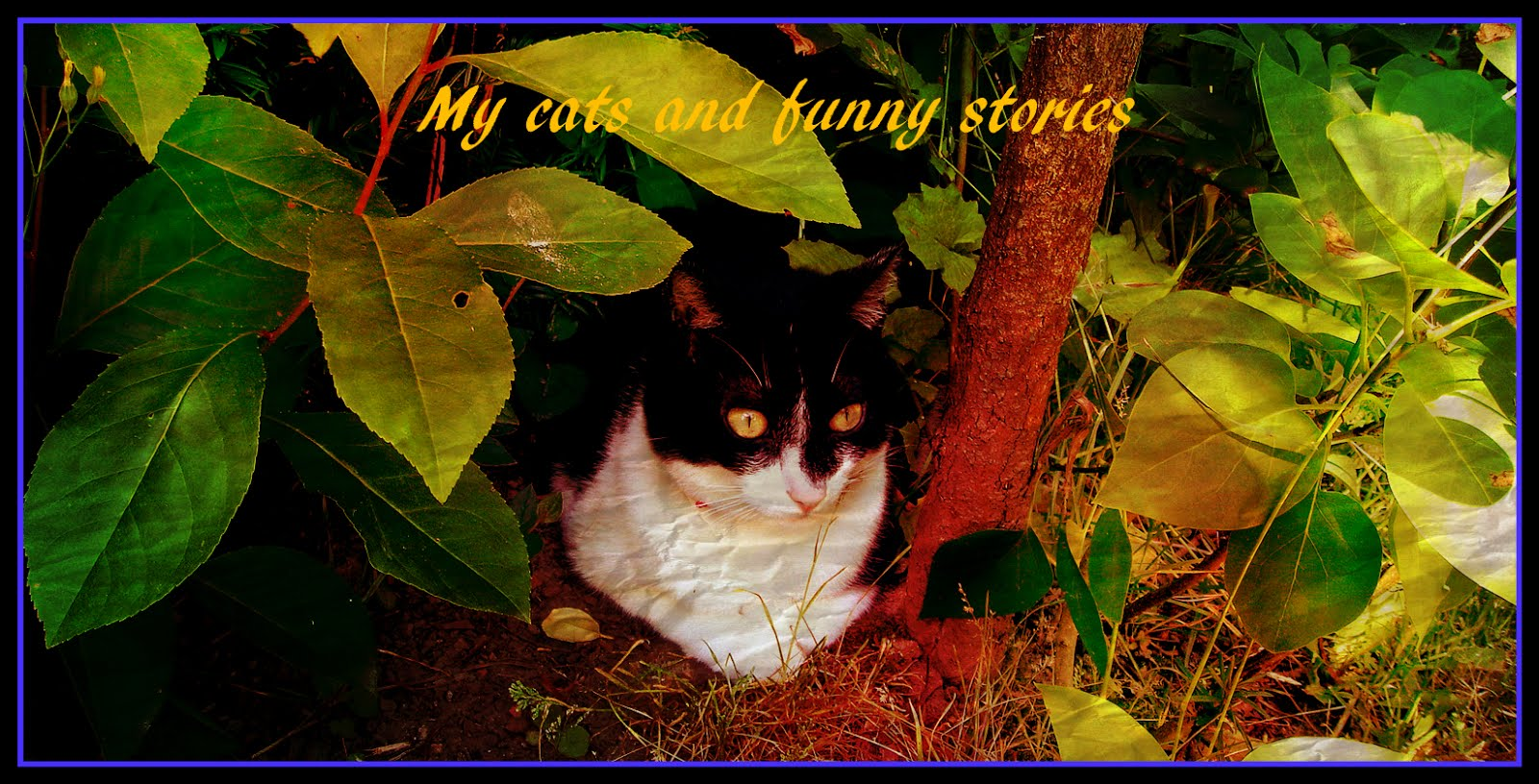 MY CATS AND FUNNY STORIES