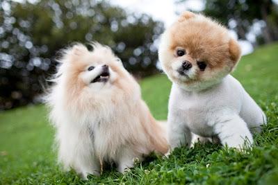 adopting a dog puppy