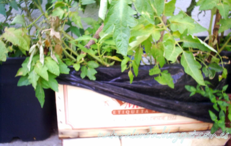 descubrimos la madera de la caja