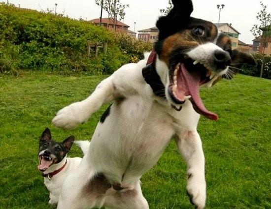 Koleksi Foto dan Gambar Anjing Lucu