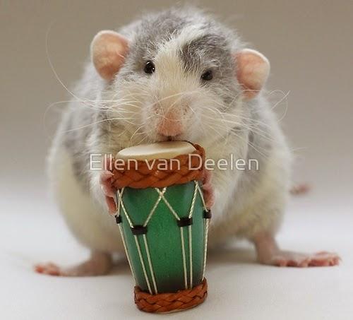 05-The-Percussionist-Musical-Dumbo-Rat-Ellen-Van-Deelen-www-designstack-co
