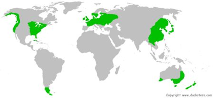 Temperate Deciduous Forest Biome World Map