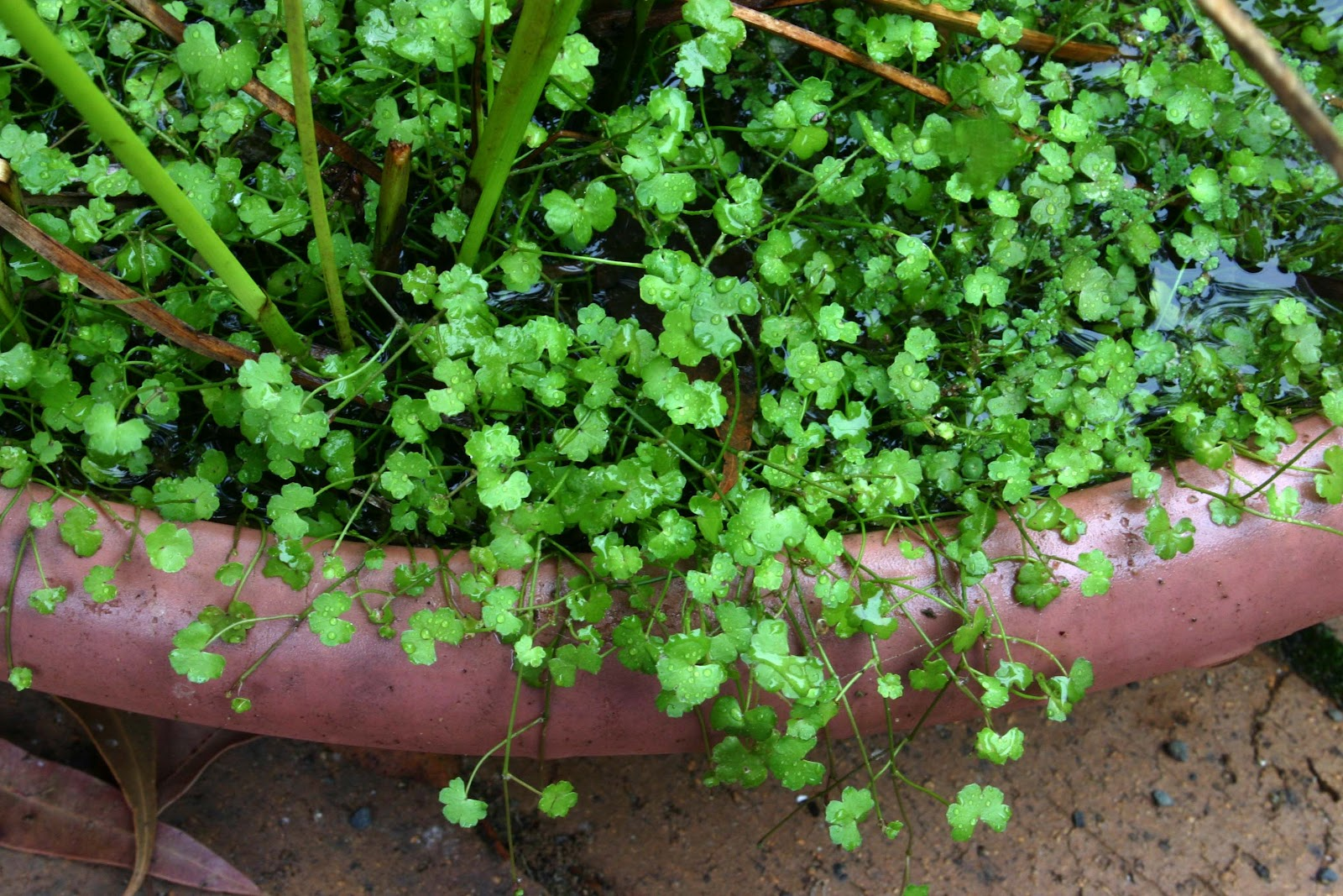 100 Little Plants Texture Background Dry Cracked
