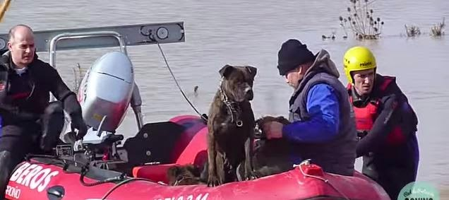 Javier Berruezo - Rescate perros La Rioja