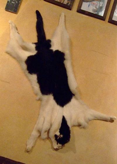 Pelset kat på væggen