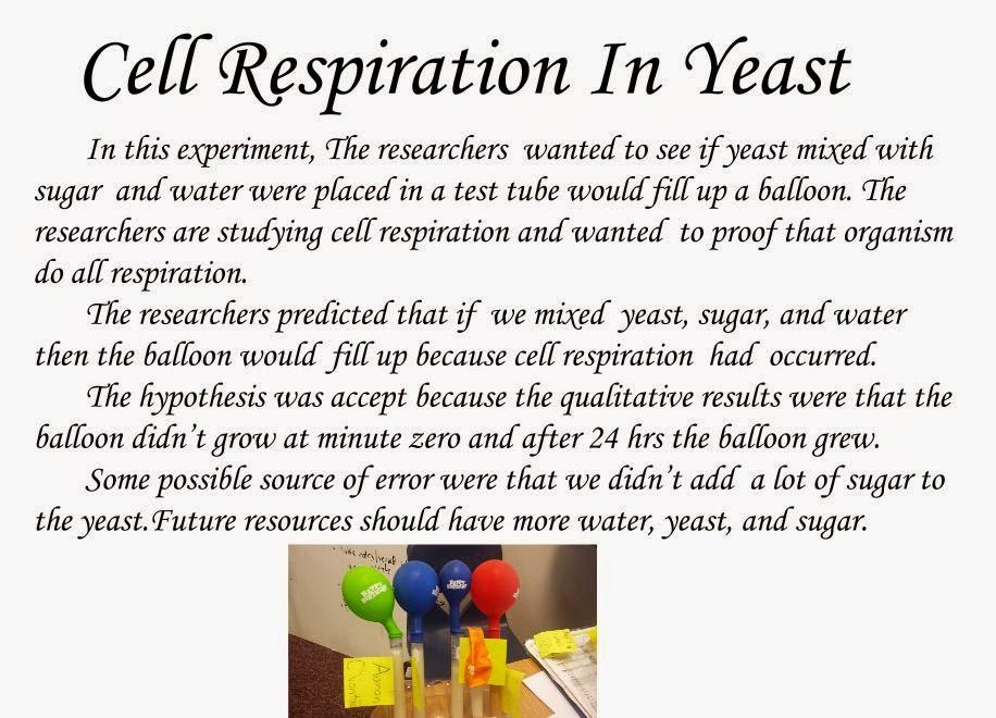 cellular respiration of yeast scientifi The yeast will produce the most cellular respiration at an optimum temperature this temperature will be at a normal room temperature if the temperature.