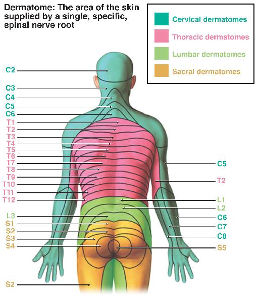 Cervical Spine Nerve Pain Chart