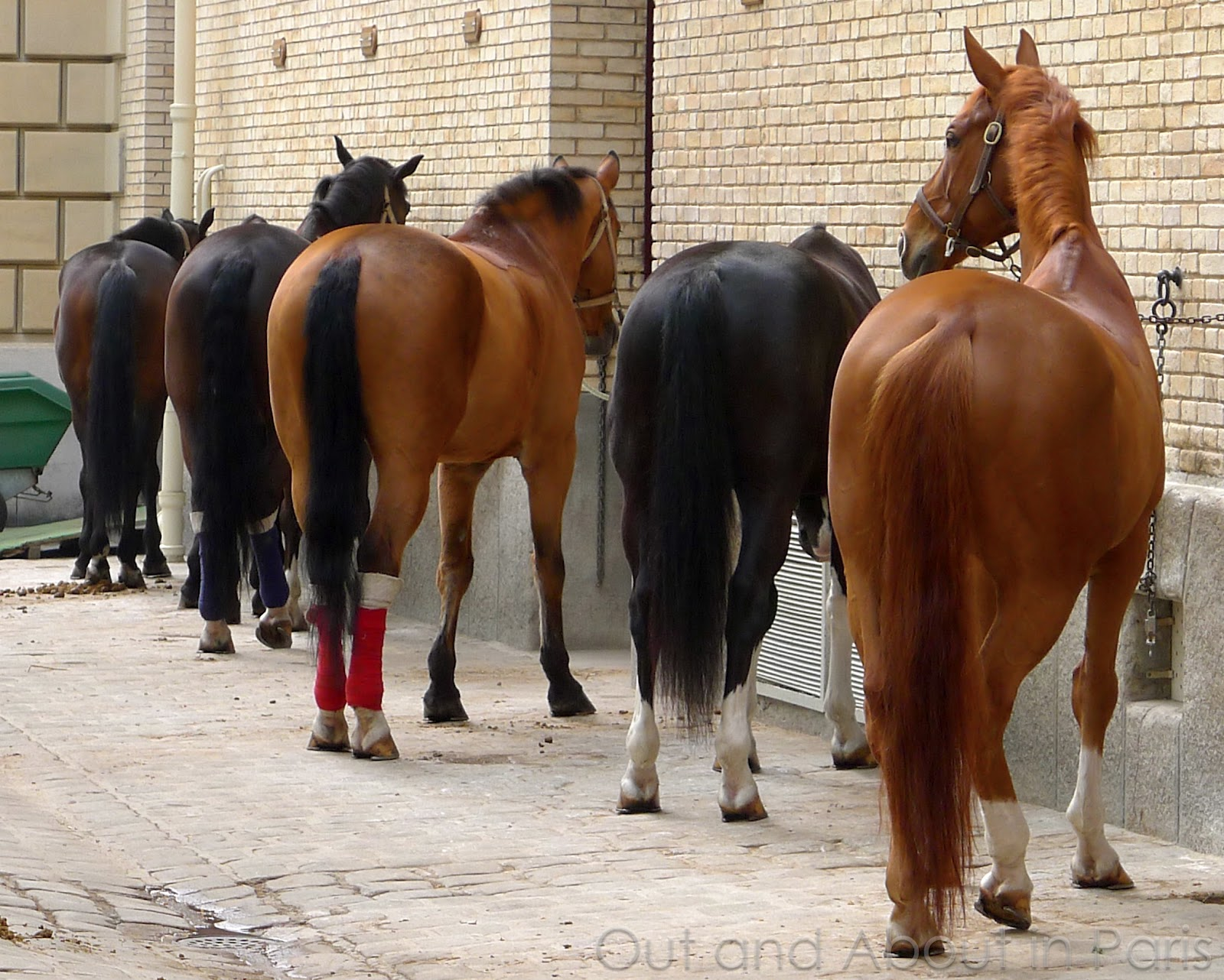 the horses of the french republican guard and the answer to the riddle