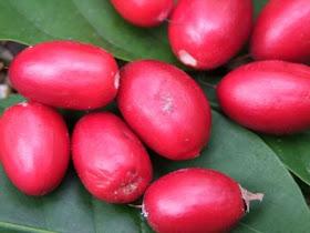 buah ajaib