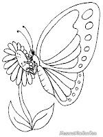 Gambar bunga dan kupu-kupu untuk diwarnai