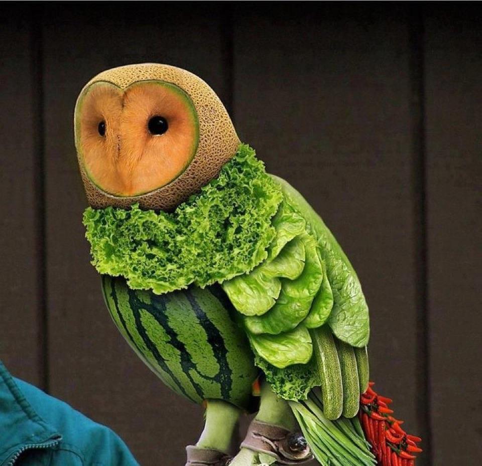 [Image: owl.jpg]