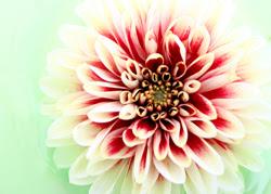 ahora, florecer