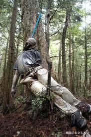 Najzanimljiviji prirodni fenomeni Aokigara