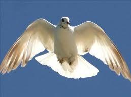 """Reuelto el misterio del """"triangulo de las bermudas"""" de las palomas"""