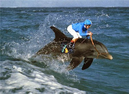 jockey at the beach