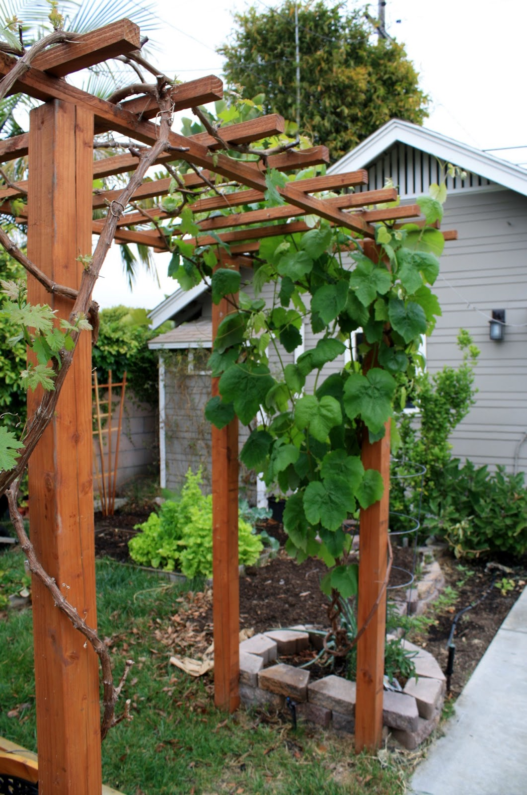 bench under the grape arbor