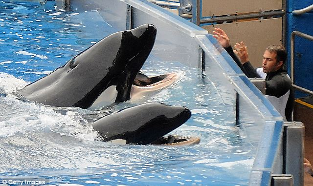 how to become an animal trainer at seaworld