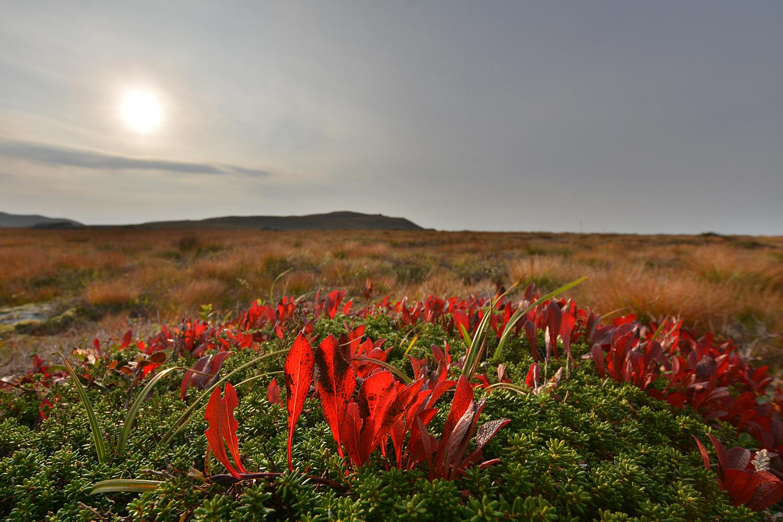 Ytre Etnefjell II 2014