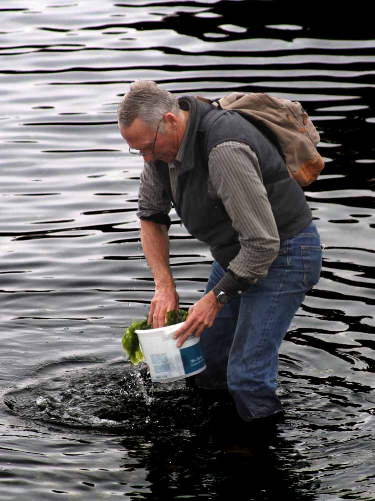 John Chapman up to his knees in seawater collects marine invertebrates at Vostok Marine Station in Russia