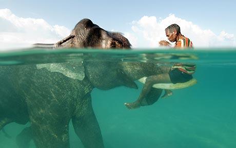 How many elephants Elephant_460_1642191c