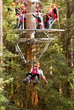 Family Friendly Otway Fly Treetops Adventures, Melbourne