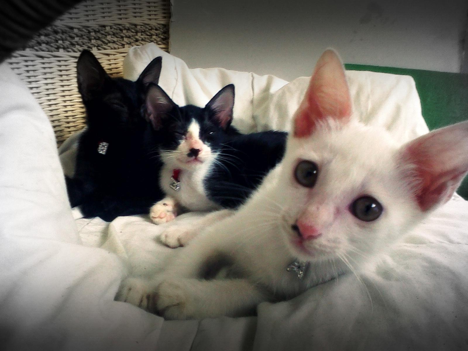 Perawatan Kucing Merawat Kucing Sedang Sakit