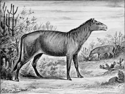 EQUIDAE fosiles Protorohippus