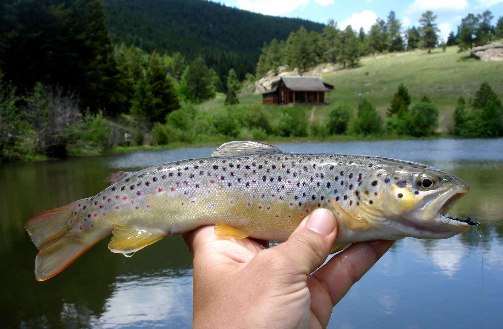 colorado fly fishing reports  brown u2019s cabin