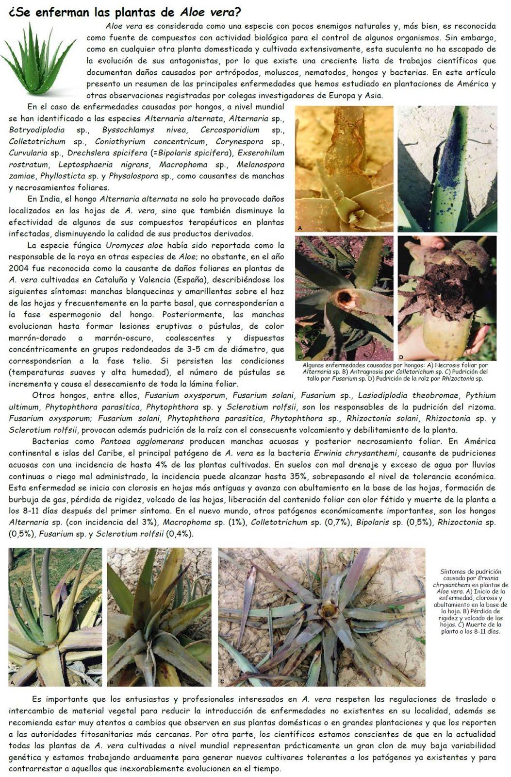 ¿Se enferman los Aloes?