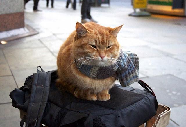 Bob el gato