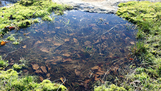 Can you spot the frog in the pond?
