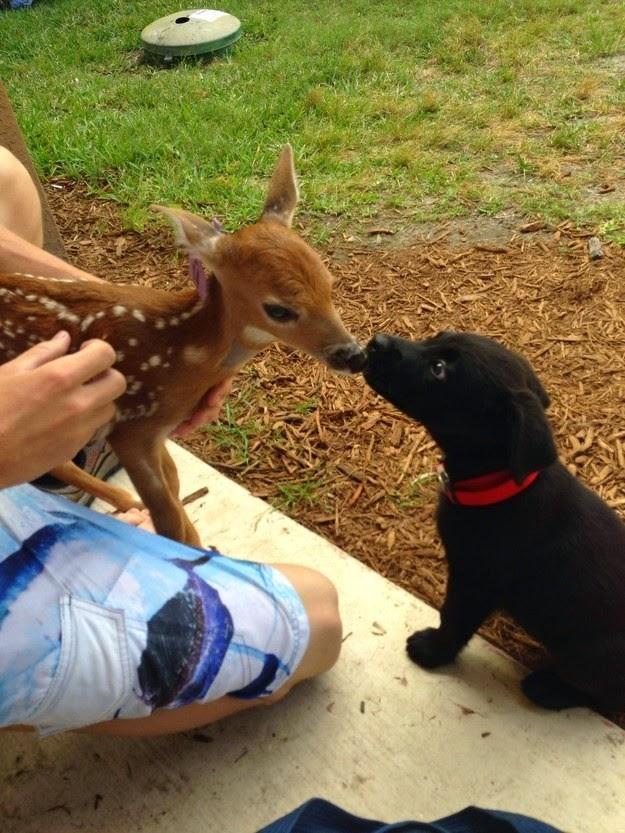 animal -love-facts-5