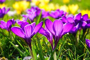Happy Spring!