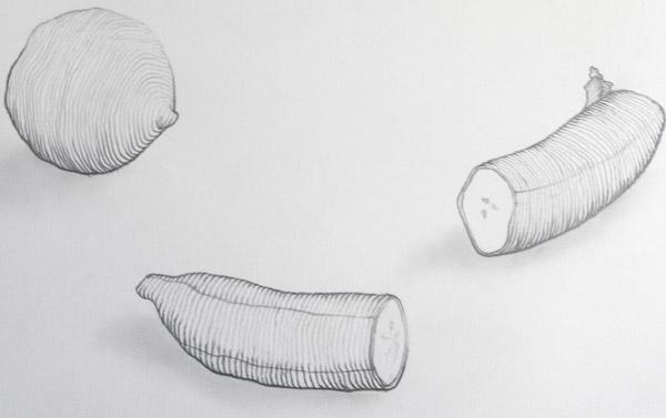 Contour Line Drawing Technique : Drawing cross contour