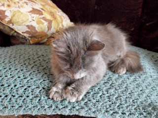 sleepy grey kitten on sofa