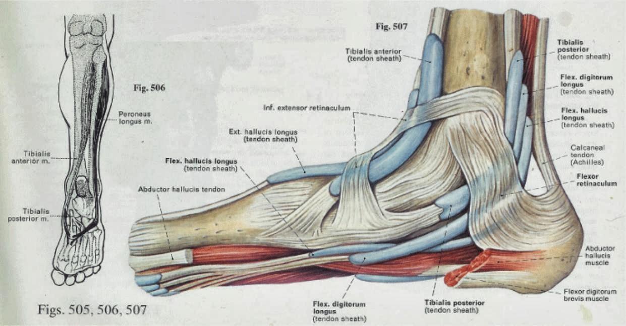 Anatomy of bottom